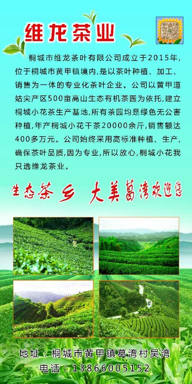 维龙茶业.jpg